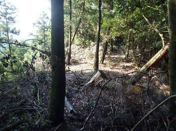 P1260996植林境尾根・伐採・倒木.JPG