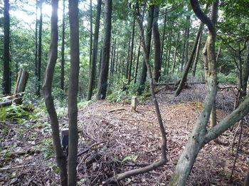 P1270024230m植林境へ出る.JPG