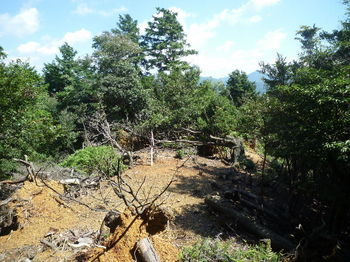 P1270034右支尾根上の小伐採地.JPG