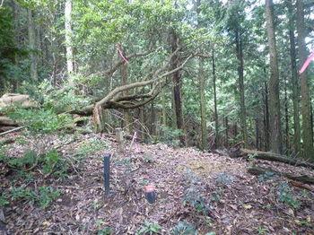 P1270041 250m地点・植林境尾根と合わさる.JPG