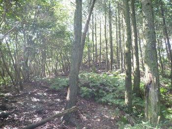 P1270042植林境.JPG