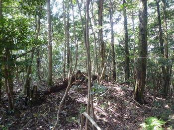 P1270083 350mピーク・右ヒノキ林境.JPG