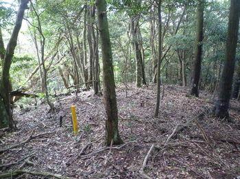 P1270085 340m小ピーク・右ヒノキ林境.JPG