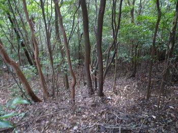 P1270093雑木疎林の谷.JPG