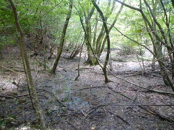 P1270105湿地帯.JPG