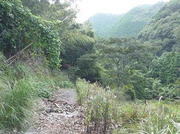 P1270179やや荒れた林道.JPG