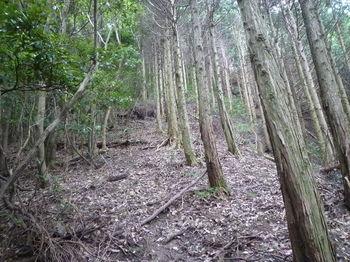 P1270220植林境の急な上り.JPG