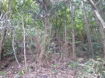 P1270228植林境の上り(角ばった岩が散在).JPG