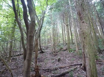 P1270231植林境の上り.JPG