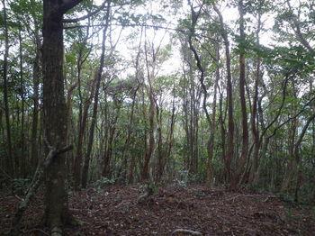 P1270234樹間越しの展望(北西方向).JPG