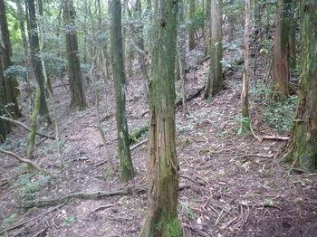 P1270278植林境で580mピークを左にトラバース.JPG