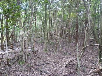 P1270283雑木疎林の緩い上り.JPG