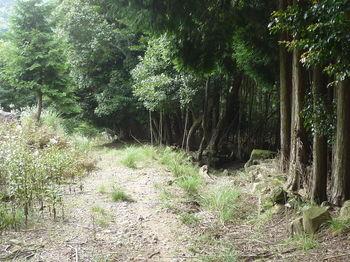 P1270337林道分岐右へ.JPG