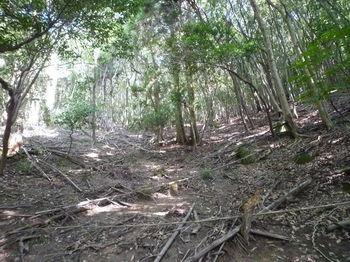 P1270418広い疎林谷を上る.JPG