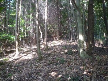 P1270421ヒノキ植林境出合い.JPG