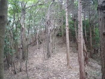 P1270600植林境上り.JPG