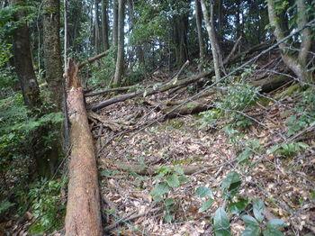 P1270630倒木による倒壊ネット.JPG
