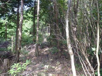 P1270631植林境平坦尾根へ出る.JPG