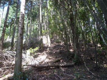 P1270633植林境上り.JPG