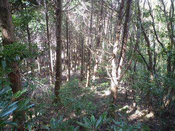 P1270635植林境下り.JPG