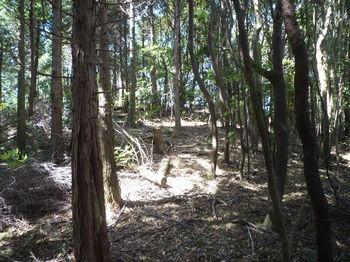 P1270636植林境上り.JPG