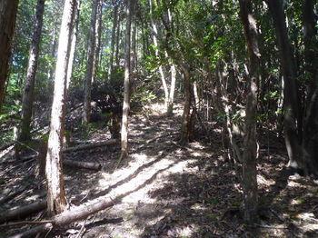 P1270642植林境の上り.JPG