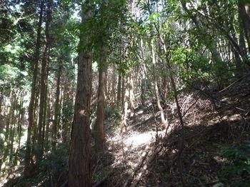 P1270645植林境斜面.JPG