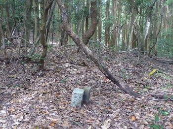 P1270668 旧町境・590mピーク②・石杭.JPG