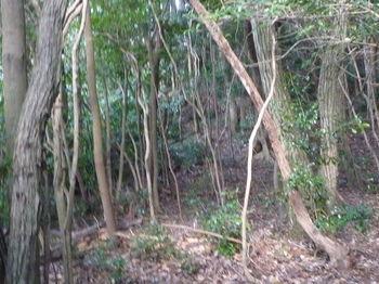 P1270746雑木林.JPG