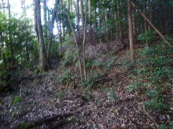 P1270747平坦地・ヒノキ植林.JPG