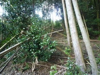 P1270749植林境の緩い尾根.JPG