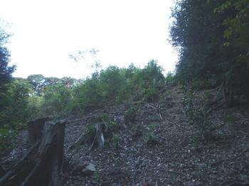 P1270750伐採地.JPG