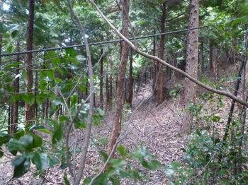 P1270795ネット出合い・植林境.JPG