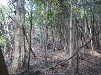 P1270797植林境右側の雑木疎林.JPG