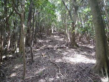 P1270816植林境上り.JPG