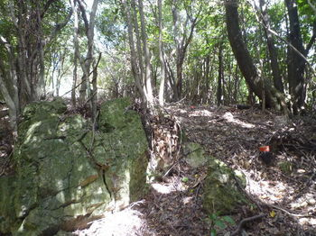 P1270817植林頂部.JPG