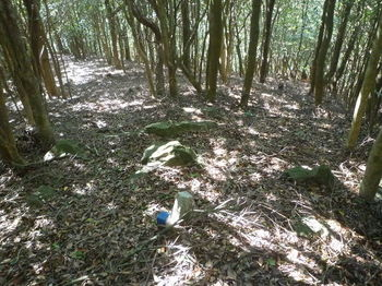 P1270896旧町境の切り開き分岐・石杭(右へ).JPG