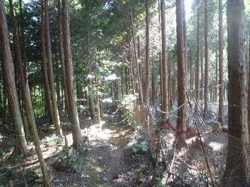 P1270935両側植林帯.JPG