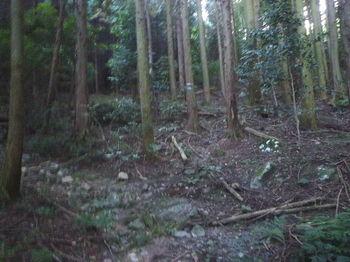 P1280030植林帯・旧山道分岐(左).jpg