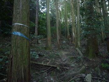 P1280032植林帯の踏み跡・テープ.JPG