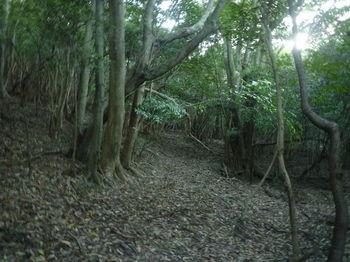 P1280039雑木疎林の切り開き.JPG