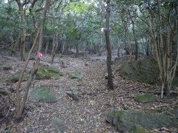 P1280045山道.JPG