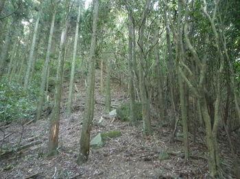 P1280079植林境尾根.JPG
