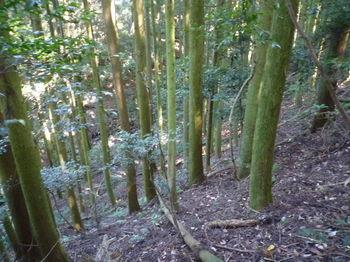 P1280151植林斜面を下る.JPG