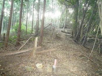 P1280226左植林境.JPG