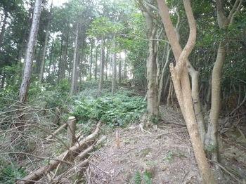 P1280228植林境上り.JPG