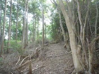 P1280232植林境.JPG