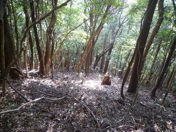 P1280260雑木疎林下り.JPG