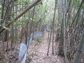 P1280269竹林・柵沿い.JPG
