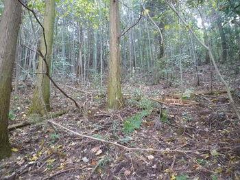P1280280植林斜面.JPG